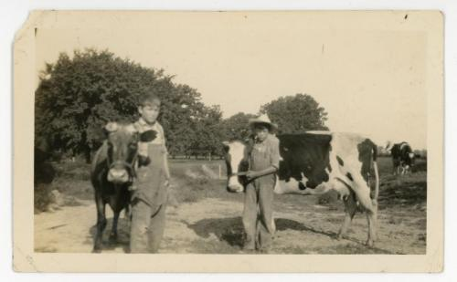 Two boys with cows.