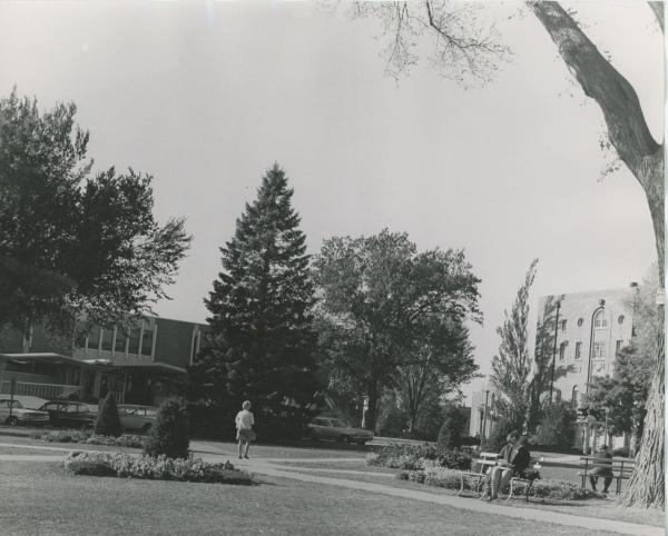 The Back Circle, c. 1966, with the oak at right center.