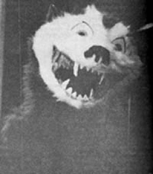 Raccoon Panther