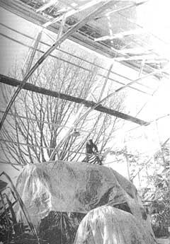 Greenhouse renovations